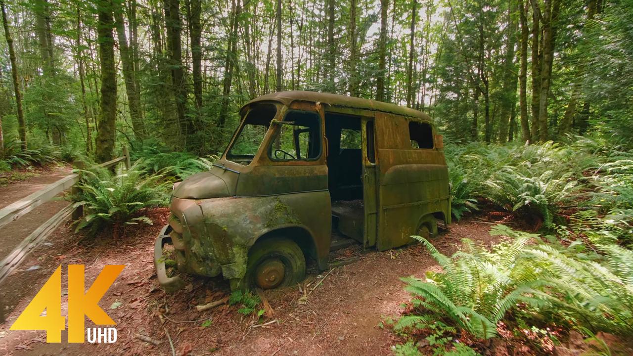 4k_May_Creek_Park,_Newcastle,_Washington_State_Virtual_Forest_Walk