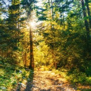 4k_WILDERNESS_CREEK_TRAIL_ISSAQUAH_TRAILS_Nature_Walking_Tour_YOUTUBE