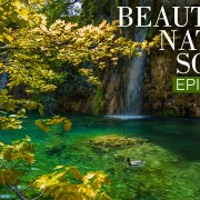 Beautiful_Nature_Sounds_8_HRS_Soothing_Bird_Songs_+_Gentle_Waterfall