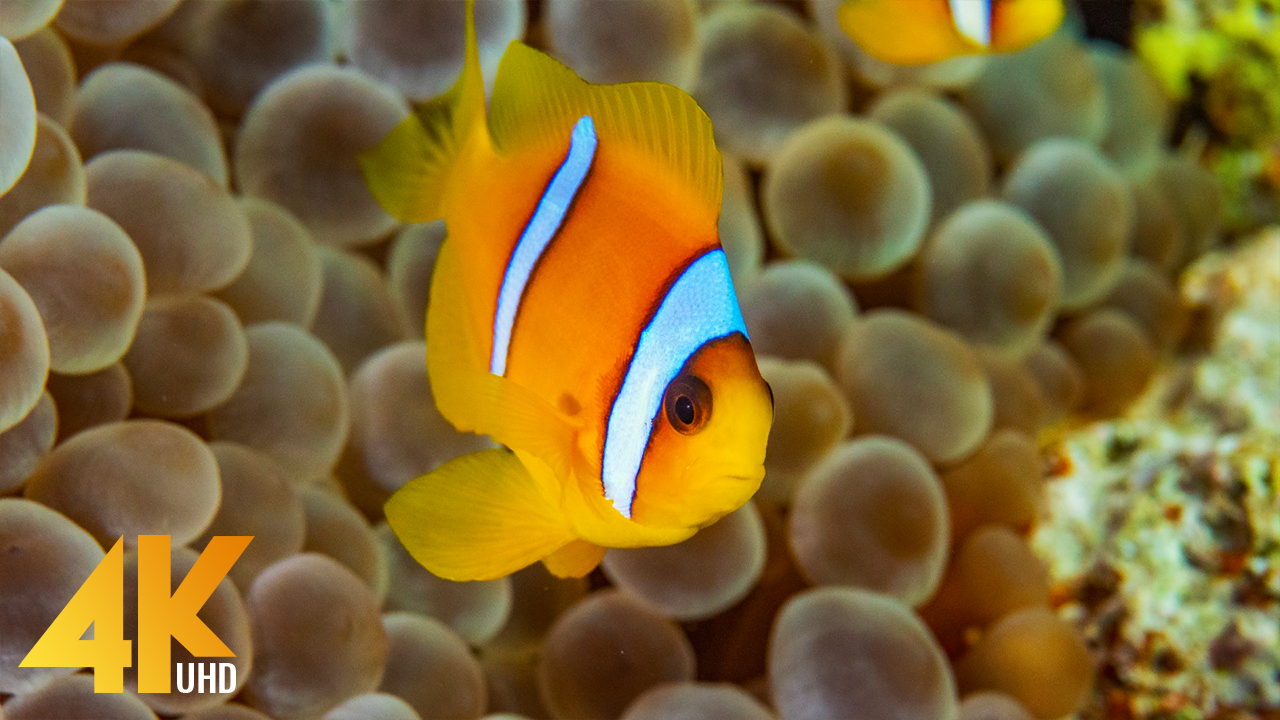 4K BEST OF THE RED SEA DIVING RELAX VIDEO YOUTUBE