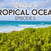 4K_Tropical_Ocean_View_HAWAII_Episod_#5_Nature_Relax_Vieo_8_hours
